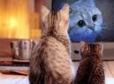 Zvířecí televize Mňau TV vysílá jen promosmyčku. Odstartuje do konce ledna?