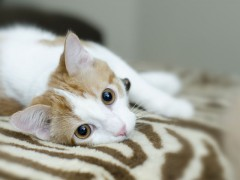 Ilustrační foto - fotobanka Shutterstock