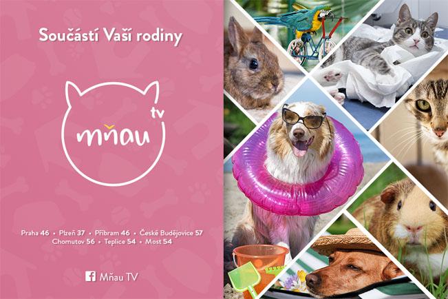 Televize Mňau a její dostupnost v regionech. Grafika: S&P Broadcasting