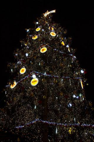 Vánoční strom na Staroměstském náměstí v Praze. Foto: Hitrádio City 93,7 FM